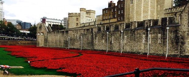 Poppies in the Tower of London